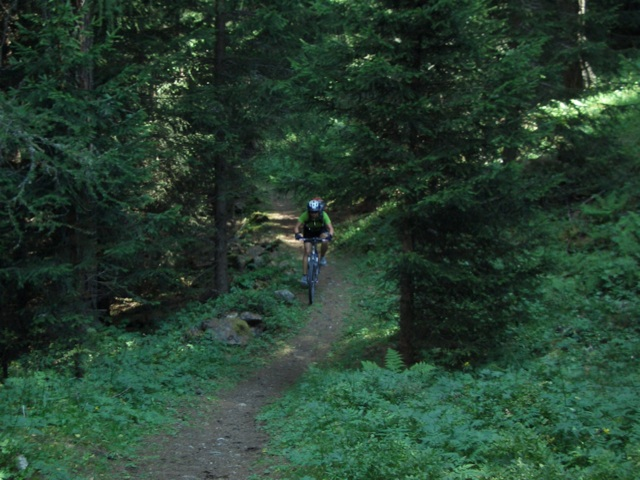 Singletrail im Wald